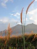 Vista di panorama del paesaggio del campo sulla montagna Immagine Stock Libera da Diritti