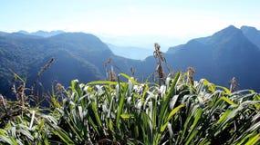 Vista di panorama dell'alta montagna della nuvola nello Sri Lanka Fotografia Stock Libera da Diritti