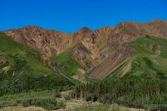 Vista di panorama della montagna con gli alberi nel parco nazionale di Denali in ala Fotografia Stock
