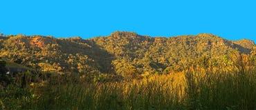 Vista di panorama della montagna con la priorità alta ed il cielo blu dell'erba Fotografia Stock