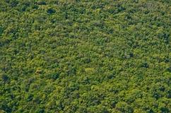 Vista di più forrest verde sul fianco di una montagna Fotografie Stock