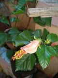 vista di pianta - fiore rosso fotografia stock libera da diritti