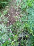 vista di pianta - più vicino fotografie stock