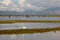 Vista di primo mattino sopra Uda Walawe Lake, Sri Lanka Immagini Stock Libere da Diritti