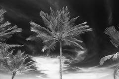 Vista di prospettiva dell'albero del cocco dal pavimento inferiore Fotografie Stock Libere da Diritti
