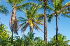 Vista di prospettiva dell'albero del cocco dal pavimento inferiore Immagini Stock