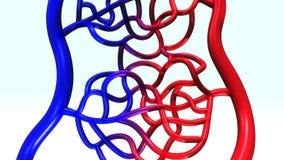 Vista di prospettiva della vena e dell'arteria illustrazione di stock