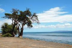 Vista di riva dell'oceano Immagini Stock