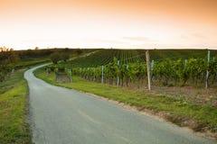 Vista di sera delle vigne Fotografie Stock
