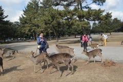 Vista di Stree in Nara Japan Immagini Stock Libere da Diritti