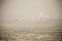 Vista di Taj Mahal dalla fortificazione di Agra Fotografia Stock
