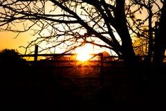 Vista di tramonto con la siluetta dell'albero fotografia stock libera da diritti