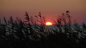 Vista di tramonto del mare con erba asciutta archivi video