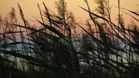 Vista di tramonto del mare con erba asciutta stock footage