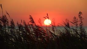 Vista di tramonto del mare con erba asciutta video d archivio