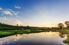 Vista di tramonto del paesaggio della piantagione di tè Fotografie Stock