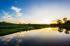 Vista di tramonto del paesaggio della piantagione di tè Fotografia Stock