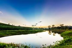 Vista di tramonto del paesaggio della piantagione di tè Fotografia Stock Libera da Diritti