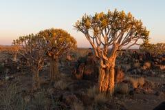 Vista di tramonto della foresta dell'albero del fremito a Garas Fotografie Stock