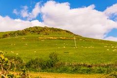 Vista di un'alta montagna sparsa con erba verde, una moltitudine di shee Fotografia Stock Libera da Diritti