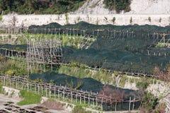 Vista di un frutteto del limone nella costa di Amalfi Fotografia Stock Libera da Diritti
