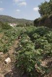 Vista di un frutteto della patata e nei precedenti un villaggio Fotografia Stock Libera da Diritti