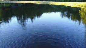 Vista di un lago in Germania che vola sopra con la vista piacevole sugli alberi Ebnisee, movimento lento della macchina fotografi archivi video