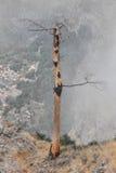 Vista di un paesaggio di un albero morto su una terra asciutta Fotografia Stock