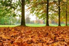 Vista di un parco a Milano, durante la caduta a volte COM della copertura delle foglie Immagine Stock Libera da Diritti
