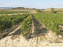 Vista di un wineyard in La Rioja, Spagna Industria enologica spagnola Immagini Stock Libere da Diritti