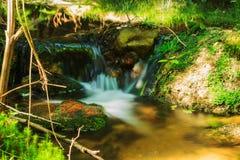 Vista di una corrente della foresta Fotografia Stock