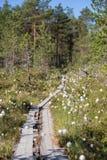 Vista di una foresta e di una regione paludosa in Finlandia Immagini Stock