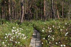 Vista di una foresta in Finlandia Fotografie Stock