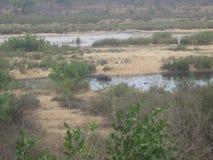Vista di una parte del parco del kruger immagine stock