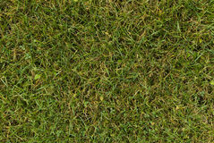Vista di una terra dell'erba verde Immagine Stock