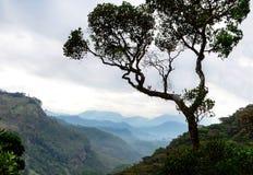 Vista di una valle della montagna nebbiosa attraverso gli alberi all'alba Fotografia Stock