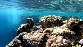 Vista di Undesea, bella roccia con i coralli, movimento lento stock footage