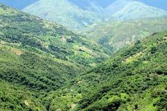 Vista di Yungas - la Bolivia Immagini Stock Libere da Diritti
