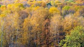 Vista dianteira da floresta colorida no dia ensolarado de outubro fotografia de stock