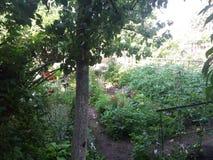 Vista diferente do jardim fotos de stock royalty free
