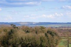 Vista distante del bianco Lion Bedfordshire England di Whipsnade Immagini Stock Libere da Diritti