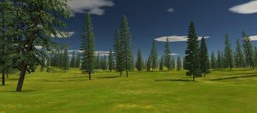 Vista do abeto vermelho verde no verão Dia ensolarado Imagens de Stock Royalty Free