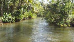 A vista do barco que flutua no rio entre a natureza selvagem com árvores inundadas e as plantas da floresta dos manguezais enviam video estoque