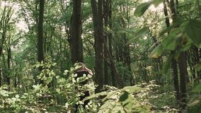 Vista do basculador na floresta verde lentamente video estoque