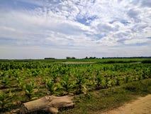 Vista do campo de sihanoukville, cambodia Imagem de Stock Royalty Free