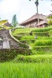 Vista do campo em Bali Imagens de Stock Royalty Free