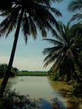 Vista do campo em Vietname do sul Imagens de Stock