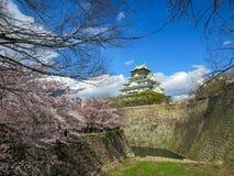 Vista do castelo bonito de Osaka através dos ramos da flor de cerejeira e do fosso de pedra do banco com fundo do céu azul imagem de stock royalty free