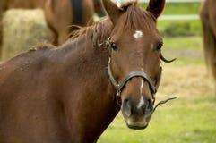 Vista do cavalo Imagens de Stock Royalty Free