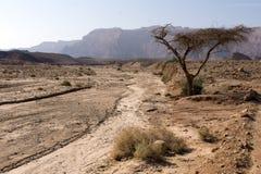Vista do deserto israelita no outono foto de stock royalty free